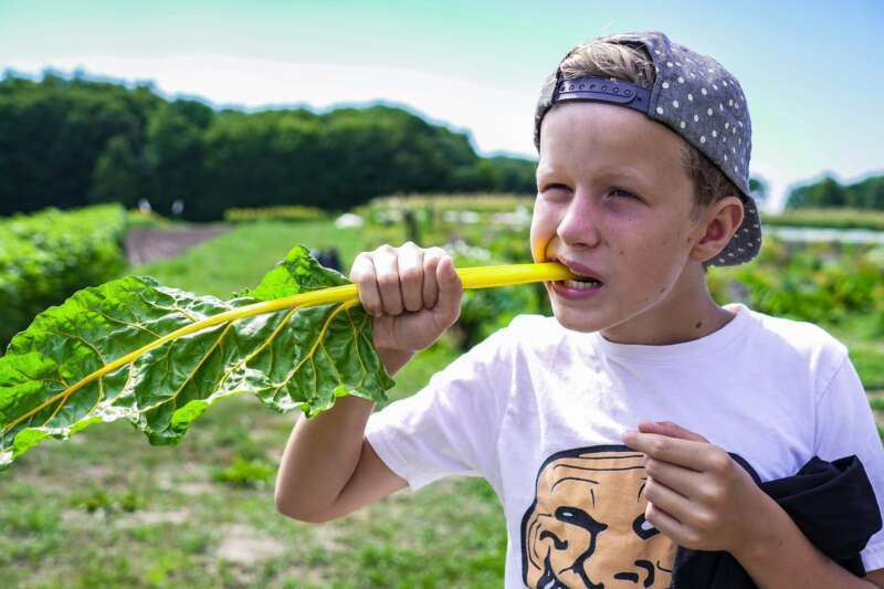 DYRK LIVET – en festival om natur, have og mad