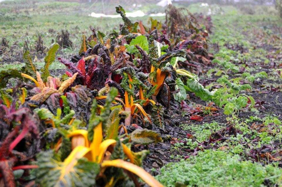 På vej mod et bæredygtigt og solidarisk madsystem?